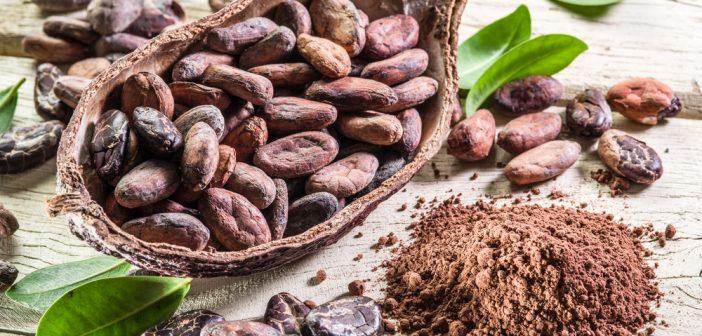 Cacao poeder cacaobonen